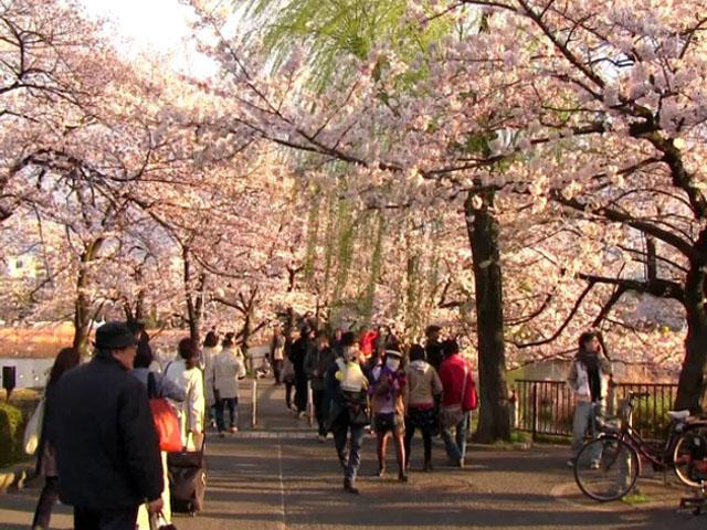 20170506 - ueno park